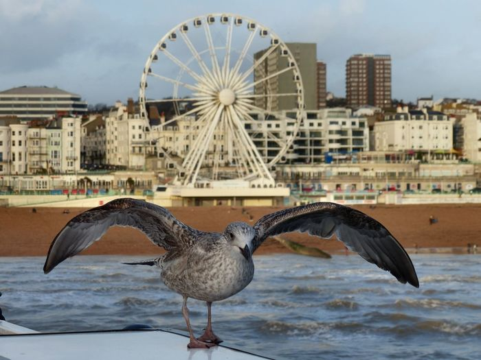 A view from Brighton Pier towards the seafront and Brighton Wheel - January 2016. Bird Brighton Brighton Wheel East Sussex England Gull Sea Sea And Sky Seafront Seafront Beach Waves  Seagull
