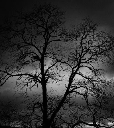 Tree Branch Bare Tree Silhouette Nature Beauty In Nature Low Angle View Scenics Growth Outdoors Sky No People Day