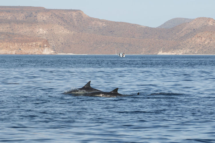 Dolphins Nature