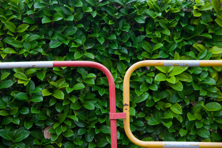 Fence against plants