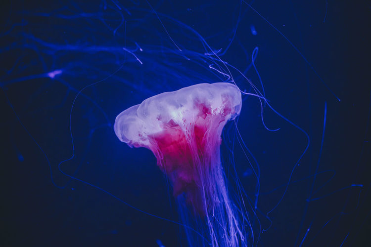 Close-up of jellyfish in illuminating sea.