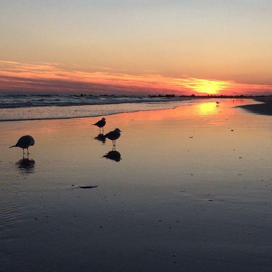 Sunset At Long Beach, NY EyeEm Best Shots Sky Collection Visualmagic EyeEm Sunset Beautiful Sky Popular Photos Splendid_reflections Sunset Silhouettes Eyem Best Shots Nature_collection