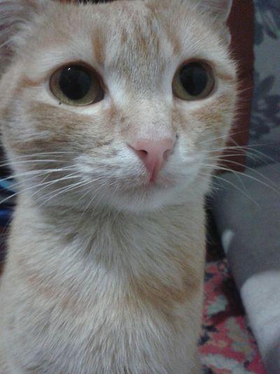 Cute Pets I Love My Cat Cat Cat Lovers Cat♡ his name is Apricot Pets Corner