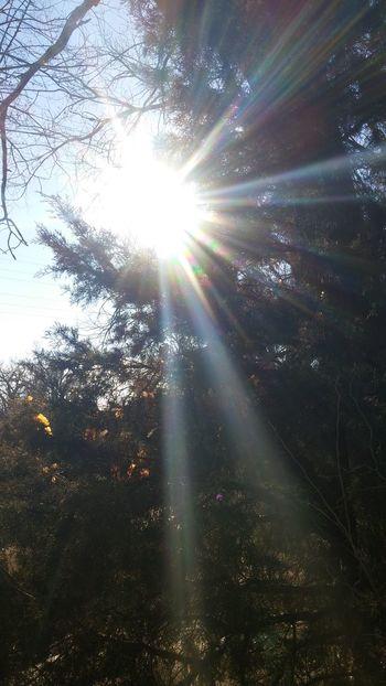 Nofilter Original EyeEm Nature Lover TreePorn Sun Sunlight Sunburst Sunbeam Trees Awesome The Sun Is Peaking Through Peakinglight
