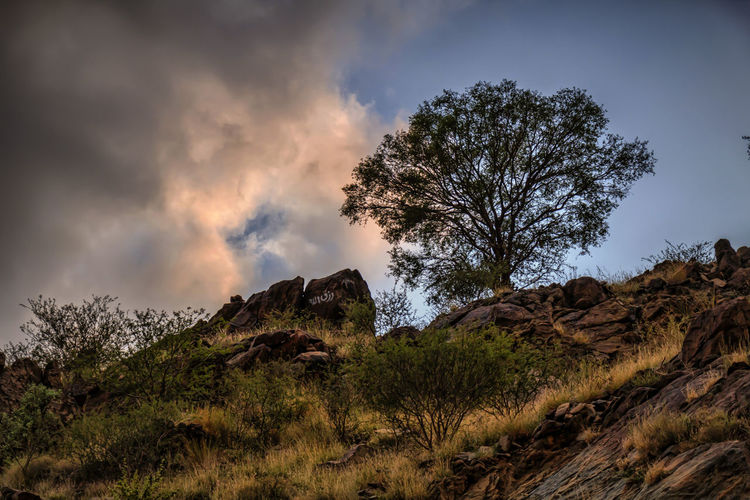 Pure nature No People Outdoors Landscape_photography Tree Nature Nature Beauty In Nature Mountain Landscape Sky Mountain Range Cloudscape Clouds Cloud Ksa😍 Taif Tree