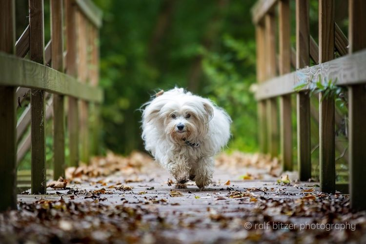 Dog One Animal Pets Animal Themes Domestic Animals Mammal Wood - Material No People Day Outdoors