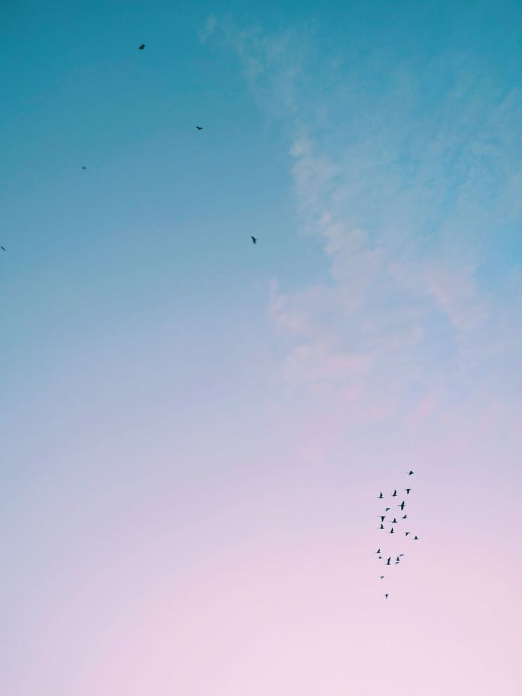 Of Parakeets and Kites.. Nexus6P HDR Nexus6pphotography VSCO Vscocam Sky And Clouds Birds In Flight Flying Bird Flock Of Birds Large Group Of Animals Animal Wildlife Animals In The Wild Animal Themes Mid-air Animal Sky Togetherness Flamingo Spread Wings Motion Outdoors Beauty In Nature No People Day