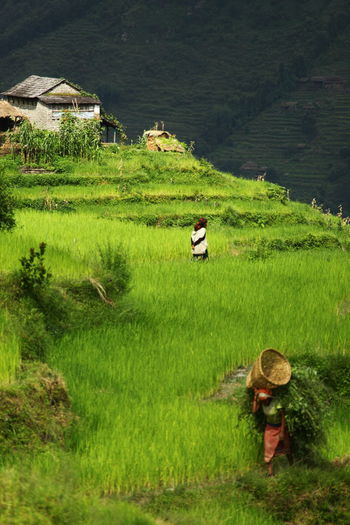 Man standing on rice field against sky