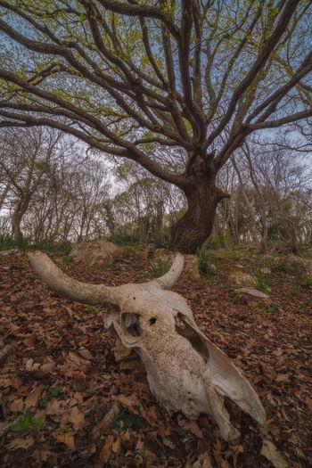 View of dead tree on field