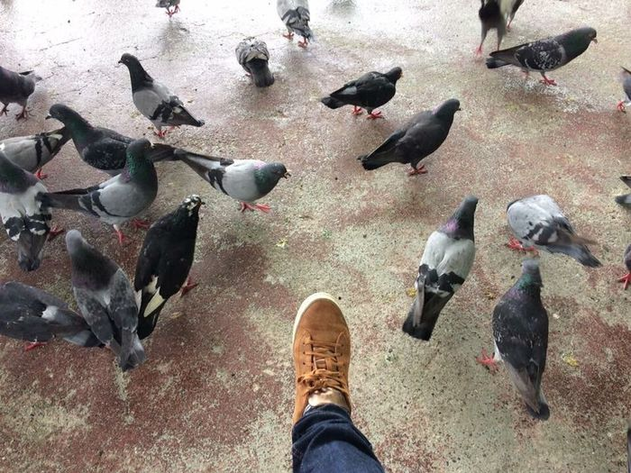 Out Of The Box shoe selfie Low Section Personal Perspective Bird High Angle View Esprit EyeEm Phillipines