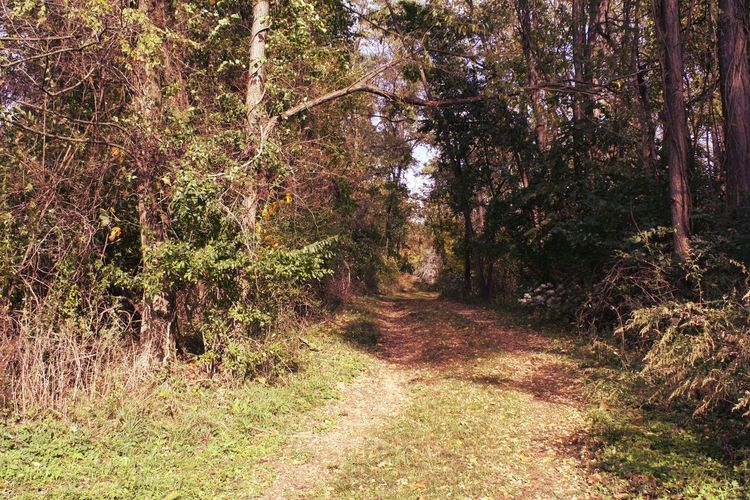Trail in woods.