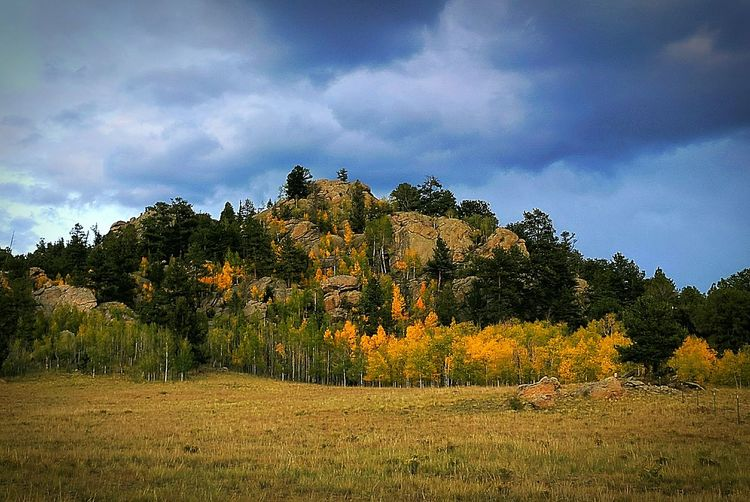 No People My Point Of View Nature Sky Mountain Tree Colorado Outdoors Google Pixel XL Landscape Beauty In Nature Freshness Fall Colors Fall Beauty Beauty Of Nature Beauty Around Me