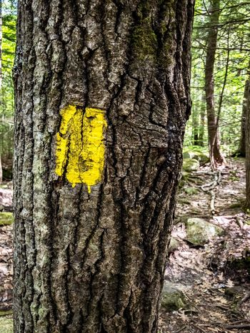 Tree Trunk Yellow Tree Day Forest No People Textured  Nature Outdoors Close-up Forest Fire Hiking Trailblazers