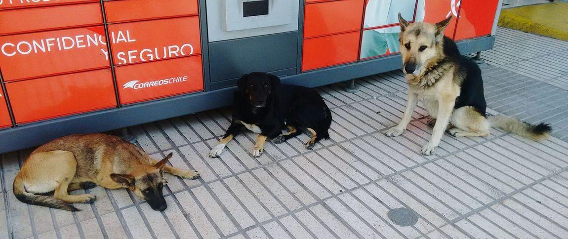 Animal Family Streephotographer Streetphotography Animals Animalphotography Animal_collection Animal Photography Dog Walking