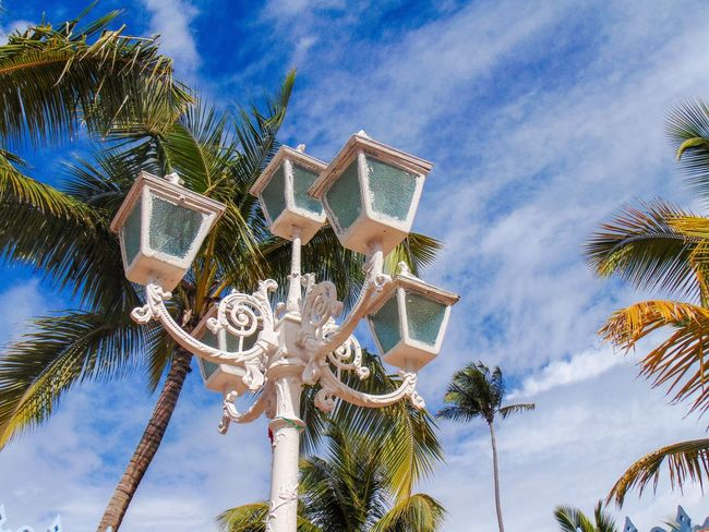 Dominican Republic standing light during noon Palm Tree Parasol Low Angle View Coconut Palm Tree Wind Sky Blue Growth Outdoors Palm Leaf Cloud - Sky Palm Frond Tropical Day No People Sea Flag Pole Shade High Section Tropical Tree