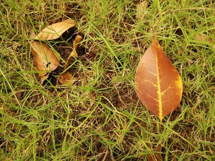 后山的那些树 Fallen Leaves Autumn Leaves
