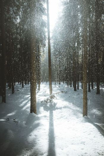 Winter forest on sun and tree in snow Snow Winter Cold Temperature Tree Plant Land Nature Sunlight Beauty In Nature Forest Day Tranquility Environment No People Scenics - Nature Growth Tranquil Scene Shadow Landscape Outdoors WoodLand Snowing Trees Shadows & Lights Winter