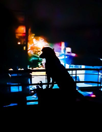 Night Illuminated Dog❤ Dog Animal Dark Figure DarkFigure Streetlight EyeEmNewHere