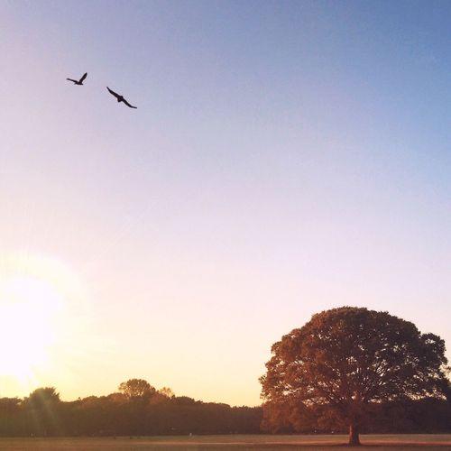 Bird flying against sky at dusk