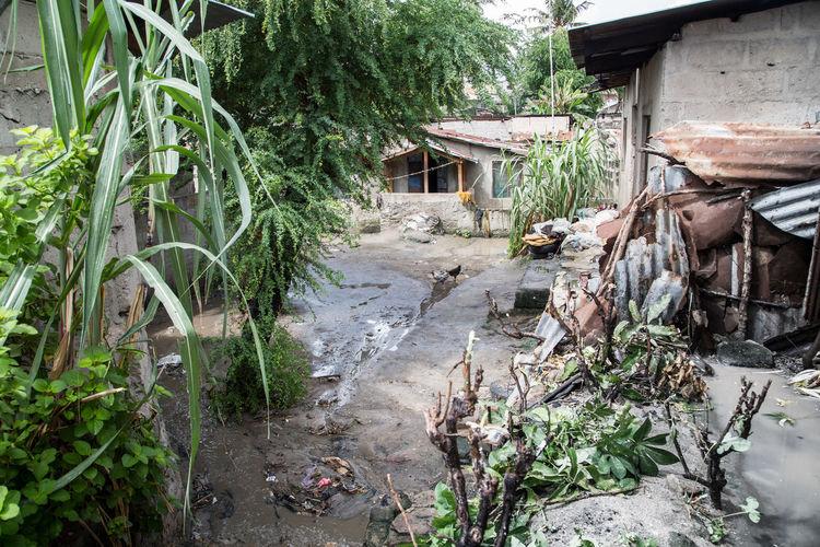 Plants growing outside house in village