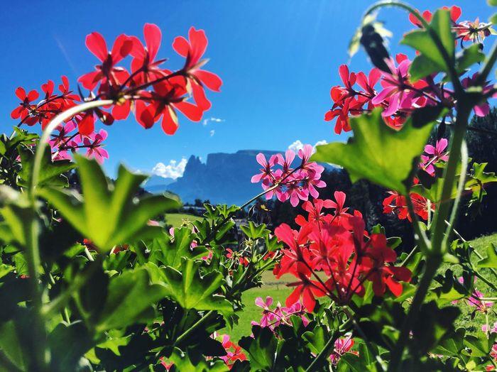 Südtirol Italien Ritten Renon Summer Dolomiten