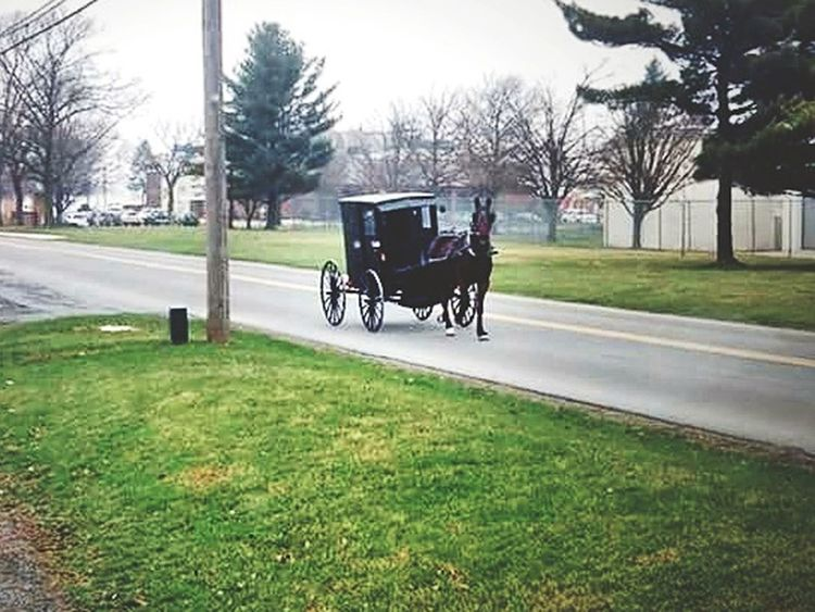 New holland pa. Horse and buggy Amishcountry