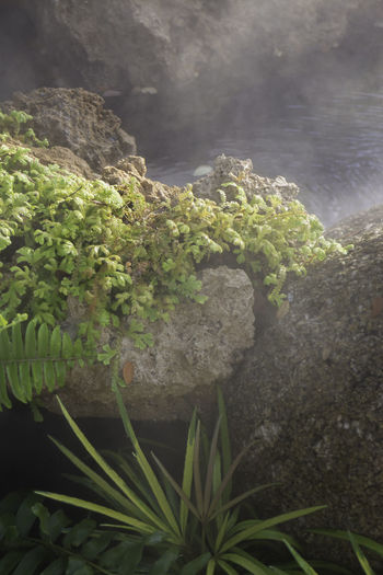 High angle view of plants growing on rock