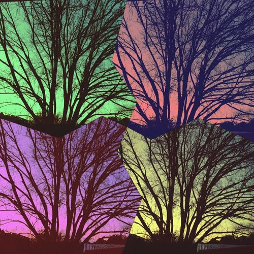 My Popart 📱📸🌿🍃💟 Popart Art Trees. Colour Colourful MyPhotography Edits