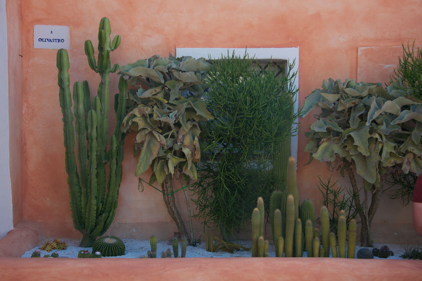 plants Architecture Cactus Day Fat Plants Green Color Growth Leaf Nature No People Orange Wall  Plant Potted Plant Thorns