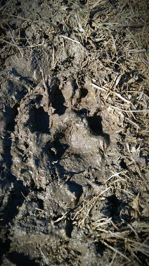 Close-up Sunlight Outdoors Nature No People Paw Print Dog Dog Print Paw Mud First Eyeem Photo