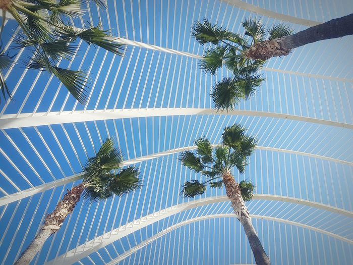 Arch Architecture_collection Architectural Feature Point Of View Garden Modern Architecture Architecture_collection Urbanphotography Urban Geometry Beauty In Nature Blue Sky Tree Palm Tree Leaf Backgrounds Pattern Full Frame Close-up Sky Green Color Plant Life Frond Botany Palm Frond Palm Leaf