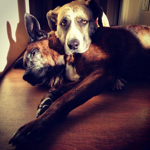 Perros  Dogstagram DogLove Amoresperros Pets