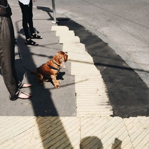 Streetphotography People Watching Dog Crossing The Street Traffic Lights City Life Summertime Light And Shadow