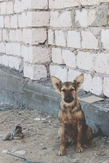 Неунывающий парень😊 собака друг человека Командировка актау