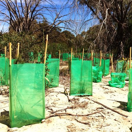 Bibra Lake Conservation, Western Australia Nature_collection Environmental Conservation Conservation Nature Conservation Planting Tree Planting Helping Hand Helping Nature Australia Australia Conservation Green Nature Green Conservation
