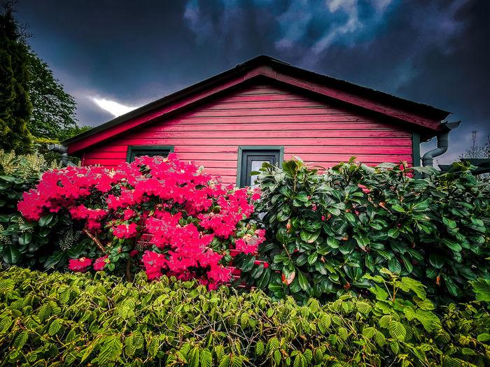 Pink flowering plants by building against sky