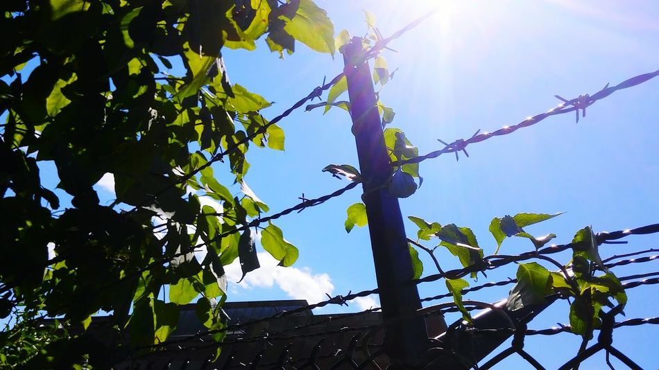 Overgrown And Beautiful Barbed Wire Against The Sky Taking Photos EyeEm Gallery No People EyeEm Best Shots Personal Perspective EyeEm Masterclass Rhode Island Photography⚓ Perspectives And Dimensions Perspective Photography Overgrown Rusty Things Simplicity Simple Elegance