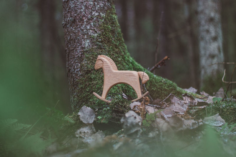 Forest Nature Women Wood Wood - Material Toy Toys Wooden Toys Wooden Horse Horse Tree Moss Summer Autumn Plant One Animal Animals In The Wild Animal Themes Animal Wildlife Animal Trunk Tree Trunk Selective Focus No People Day Vertebrate Outdoors Land Growth Reptile Surface Level