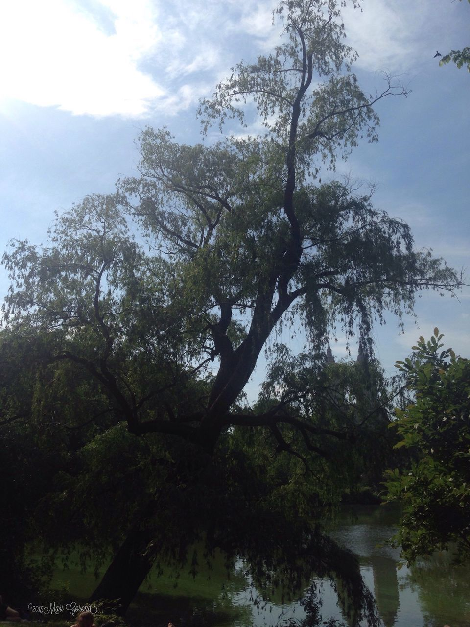 tree, nature, tranquility, sky, beauty in nature, growth, water, day, outdoors, reflection, no people, scenics, branch, low angle view, forest