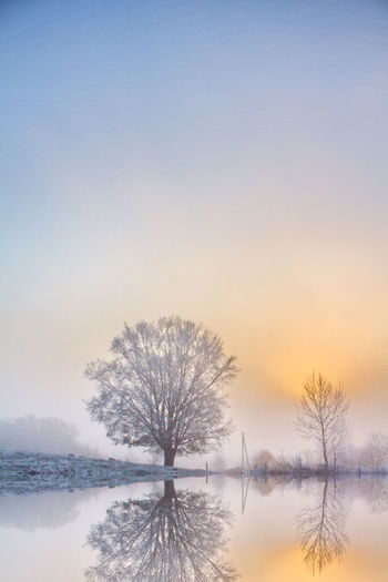 Mirrored Bare Tree Beauty In Nature Cold Temperature Dawn Day Fog Lake Nature No People Outdoors Scenics Sky Snow Sunset Symmetry Tranquility Tree Winter
