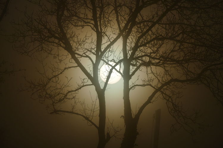 Foggy day.. Backgrounds Bare Tree Beauty In Nature Branch Day Dream States Ethereal Fog Foggy Foggy Weather Forest Landscape Nature No People Outdoors Scenics Silhouette Silhouette Silhouette_collection Sky Softness Sunset Tranquility Tree Perspectives On Nature