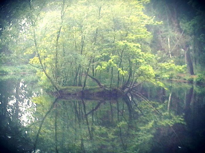SpiegelGrün Outdoors Natural Beauty Zwanzig15 Schleswigholstein