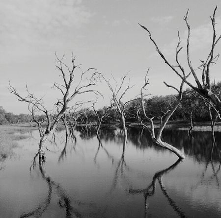 Water Nature Marsh Black And White Photography Deadtree Texas