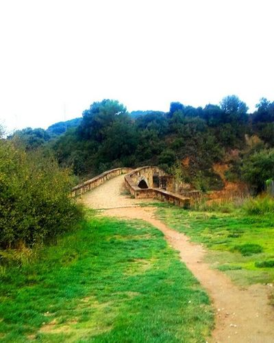 I will find my way Bridge CaminodeSantiago Green Elvenpath Wanderlust