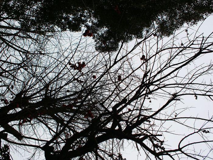 Trees Fruits