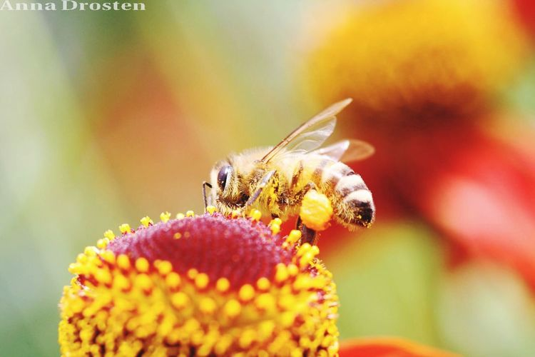 Animals Animal Macro Flower Bee Summer Sein Canon Sun