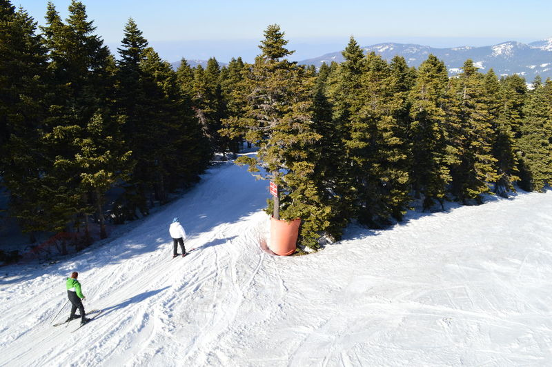 Skiing in the mountains of Bursa Tree Snow Outdoors Day Nature Sunlight One Person Go Higher
