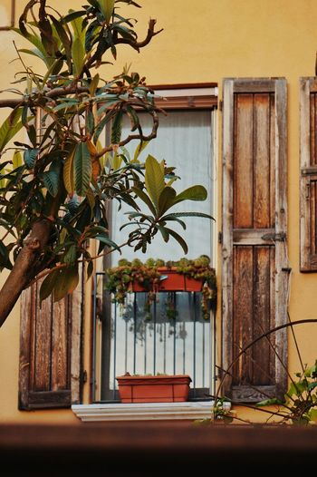balcony in Italy Tree Flower Architecture Building Exterior Plant Built Structure Pavilion Entryway Palace Door Door Knocker Façade Closed Mansion