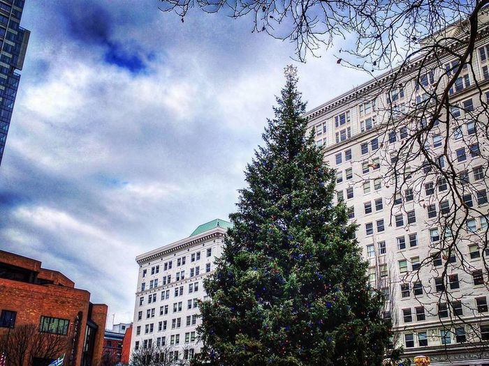 Tree Sky Architecture Cloud - Sky Building Exterior Built Structure No People Growth Outdoors City Nature Day xmas