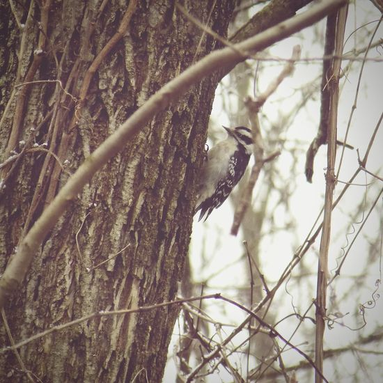 Woodpecker Birdingphotography Bird Watching Birds Of EyeEm  Birds_collection Birding Birds🐦⛅ Birdwatching Bird Photography Bird Birds Backyard Birder Animals Animal Animal Photography Animal_collection